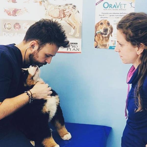 Visite veterinarie Vinovo Torino