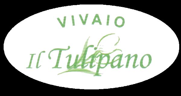Il Tulipano Follonica (GR)