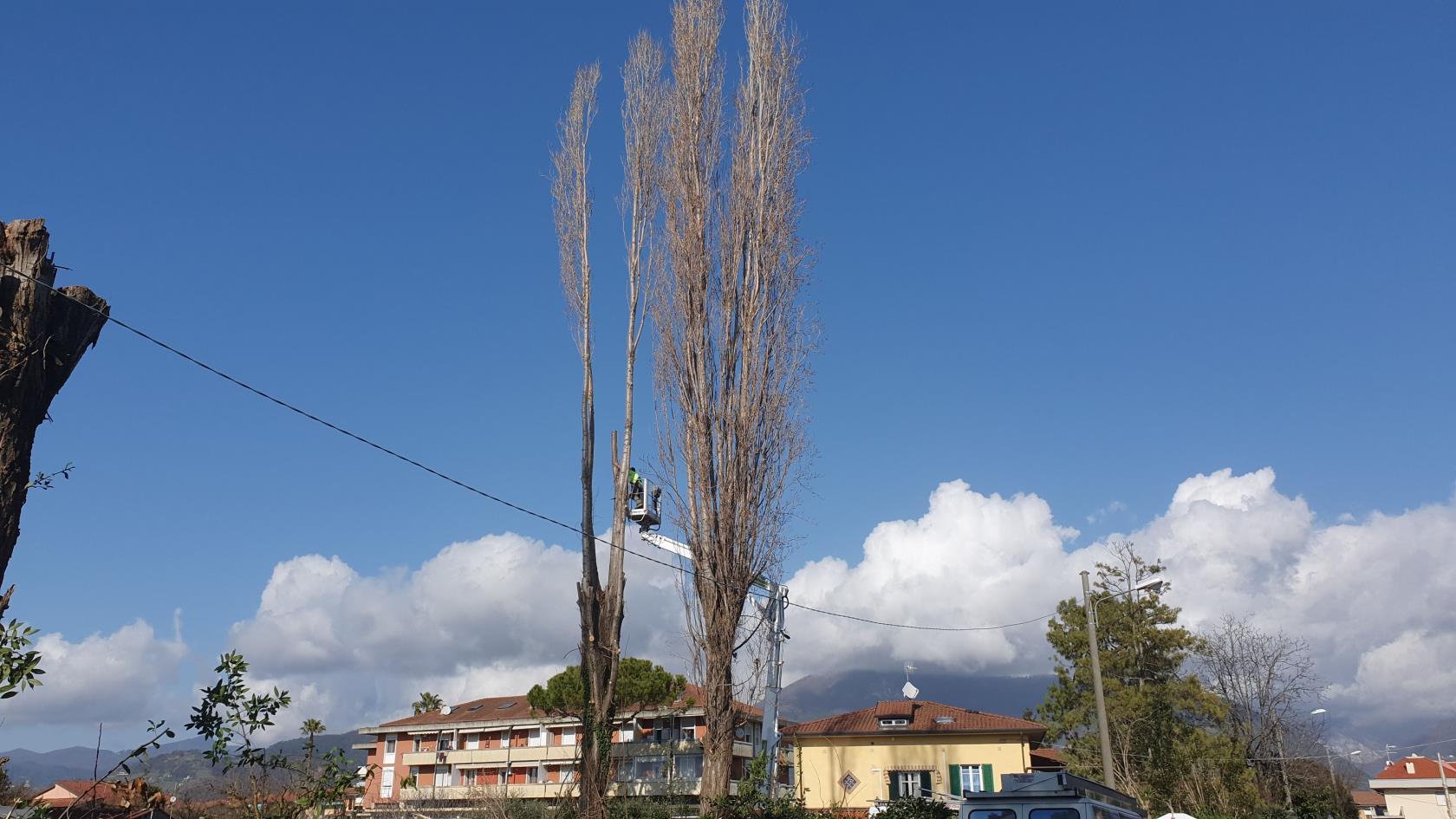 potature e abbattimenti alberi