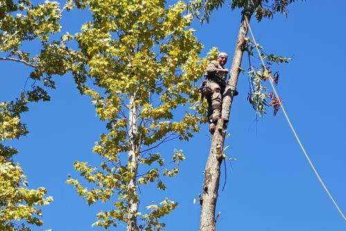 potature tree climbing
