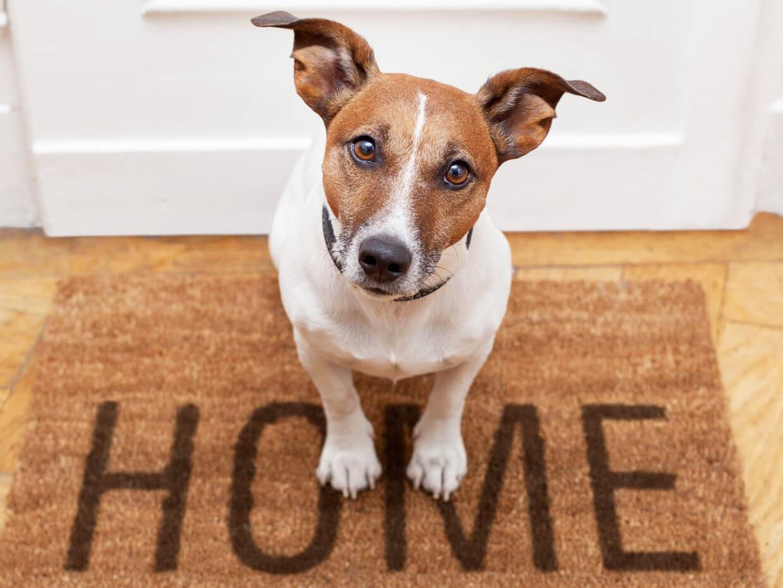 Prodotti e accessori per animali Doggy Style