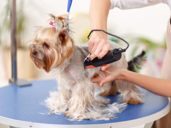 Servizio toelettatura per cani Doggy Style