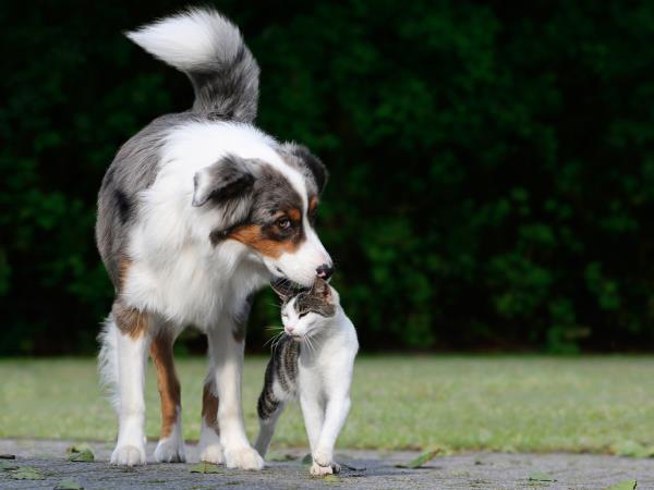 Vendita cani di tutte le razze Doggy Style