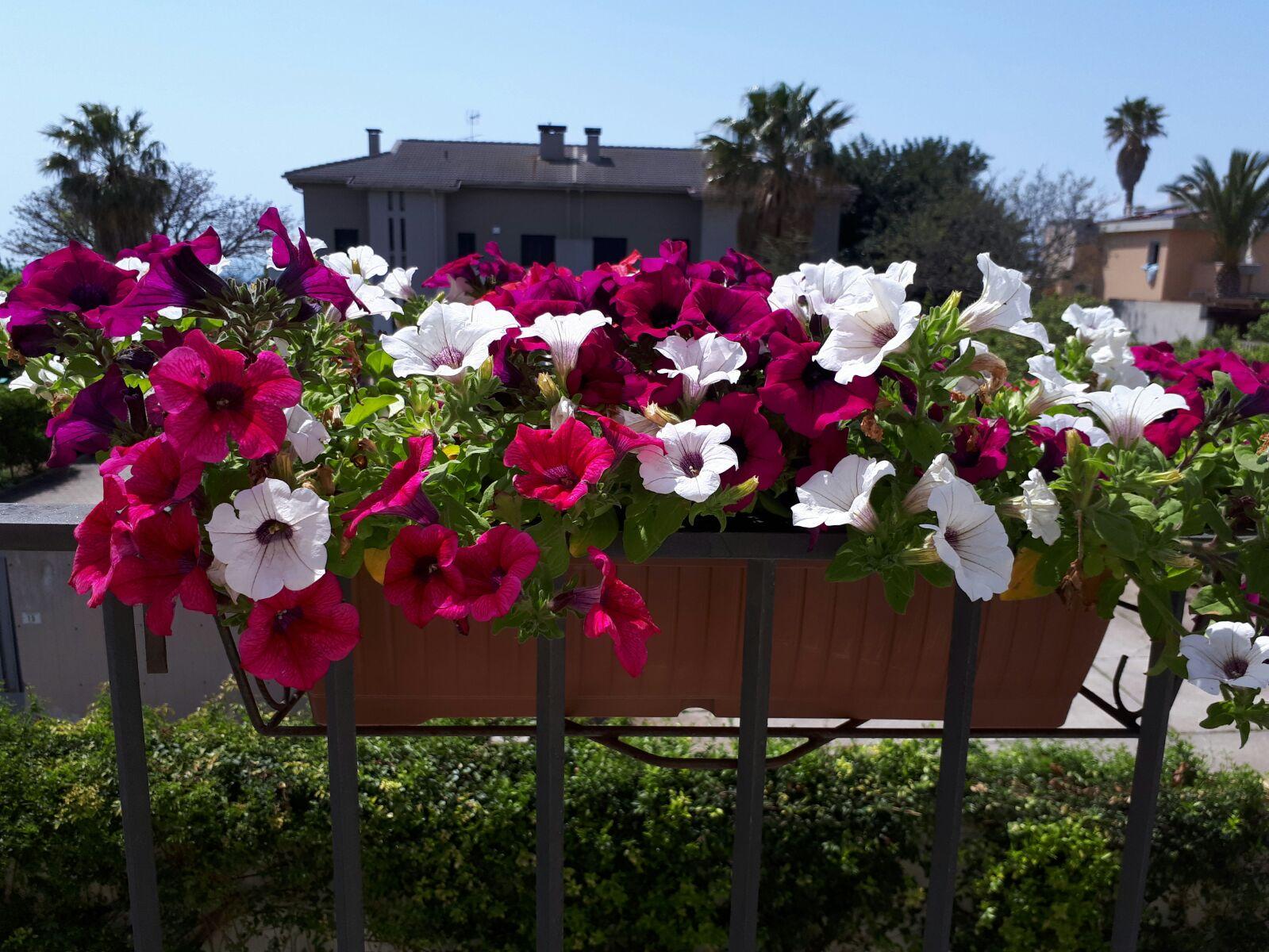manutenzione giardini villasimius