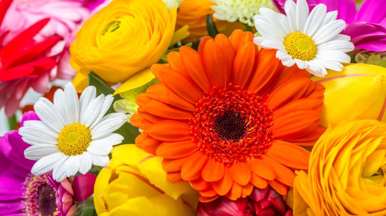 Addobbi e decorazioni floreali Clorophilla