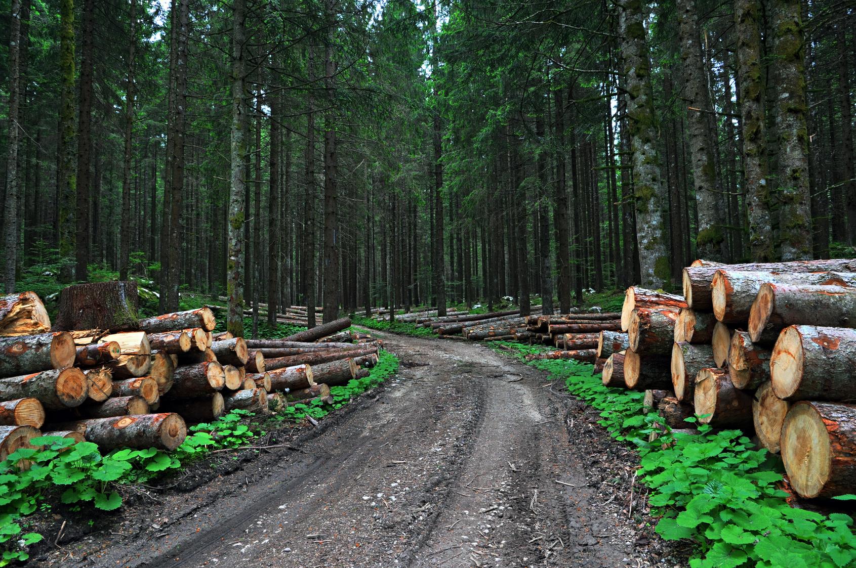preventivi legna da ardere Novara