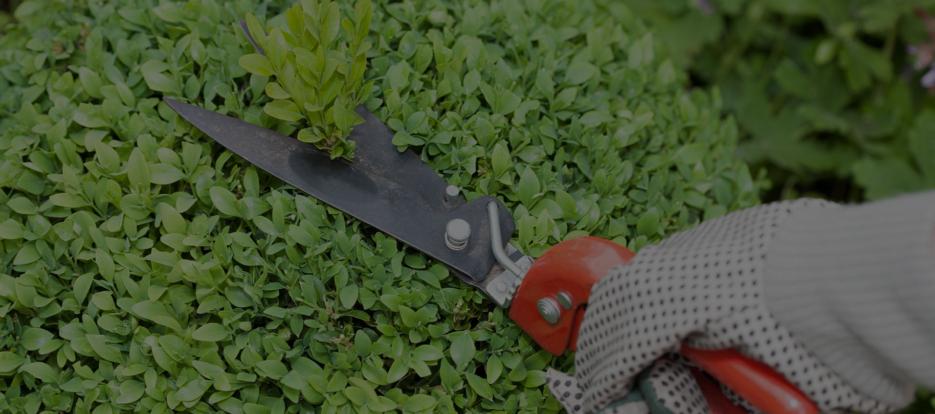 Articoli per l'orto e per il giardino Agraria Covre