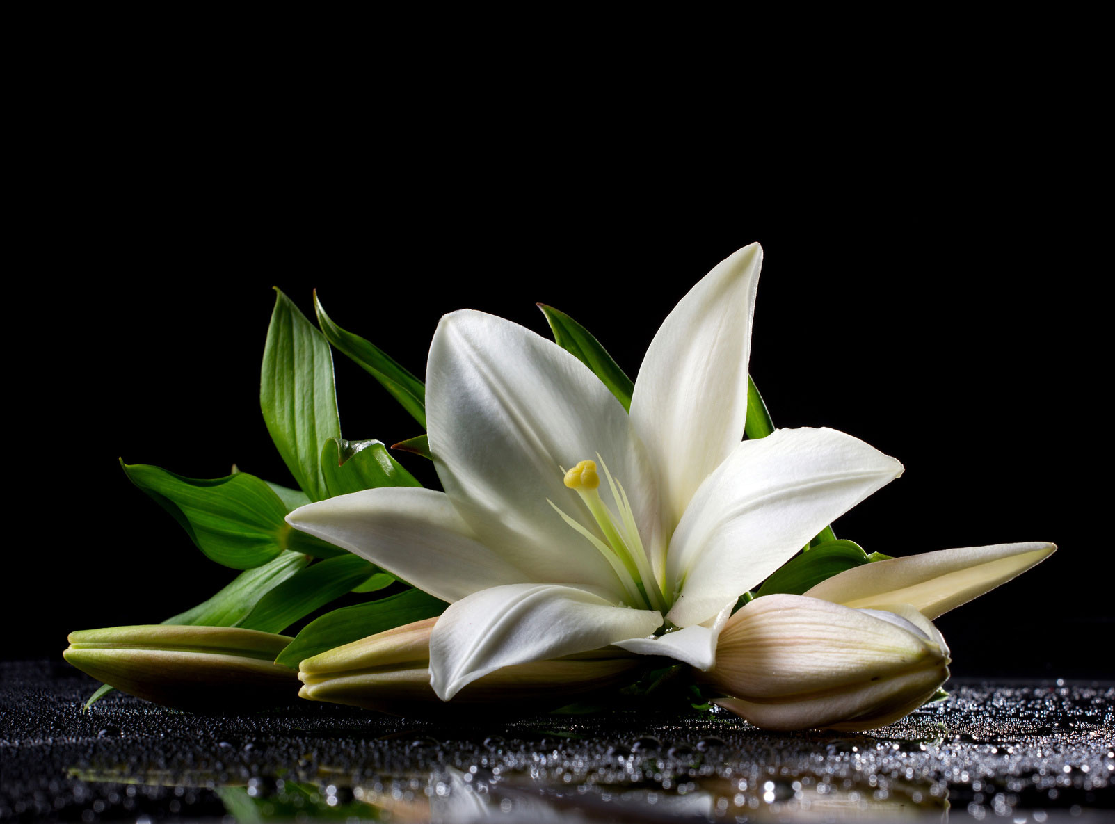 Onoranze Funebri Cingolani Allestimenti e addobbi floreali