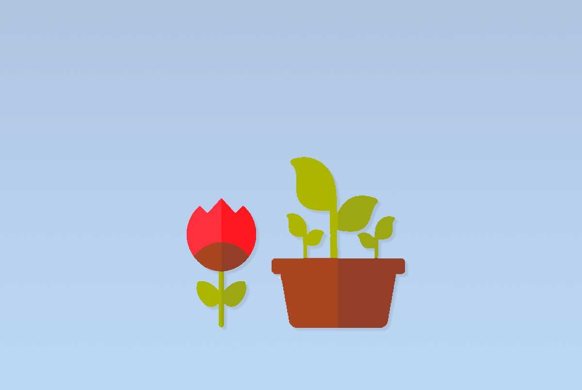 noleggio piante per locali