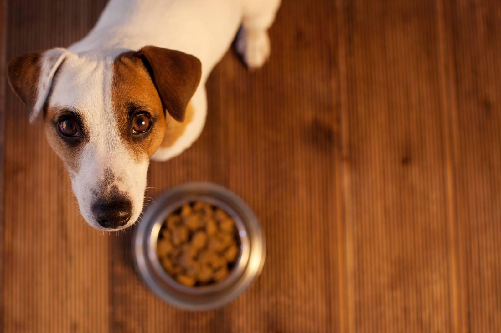mangime per cani