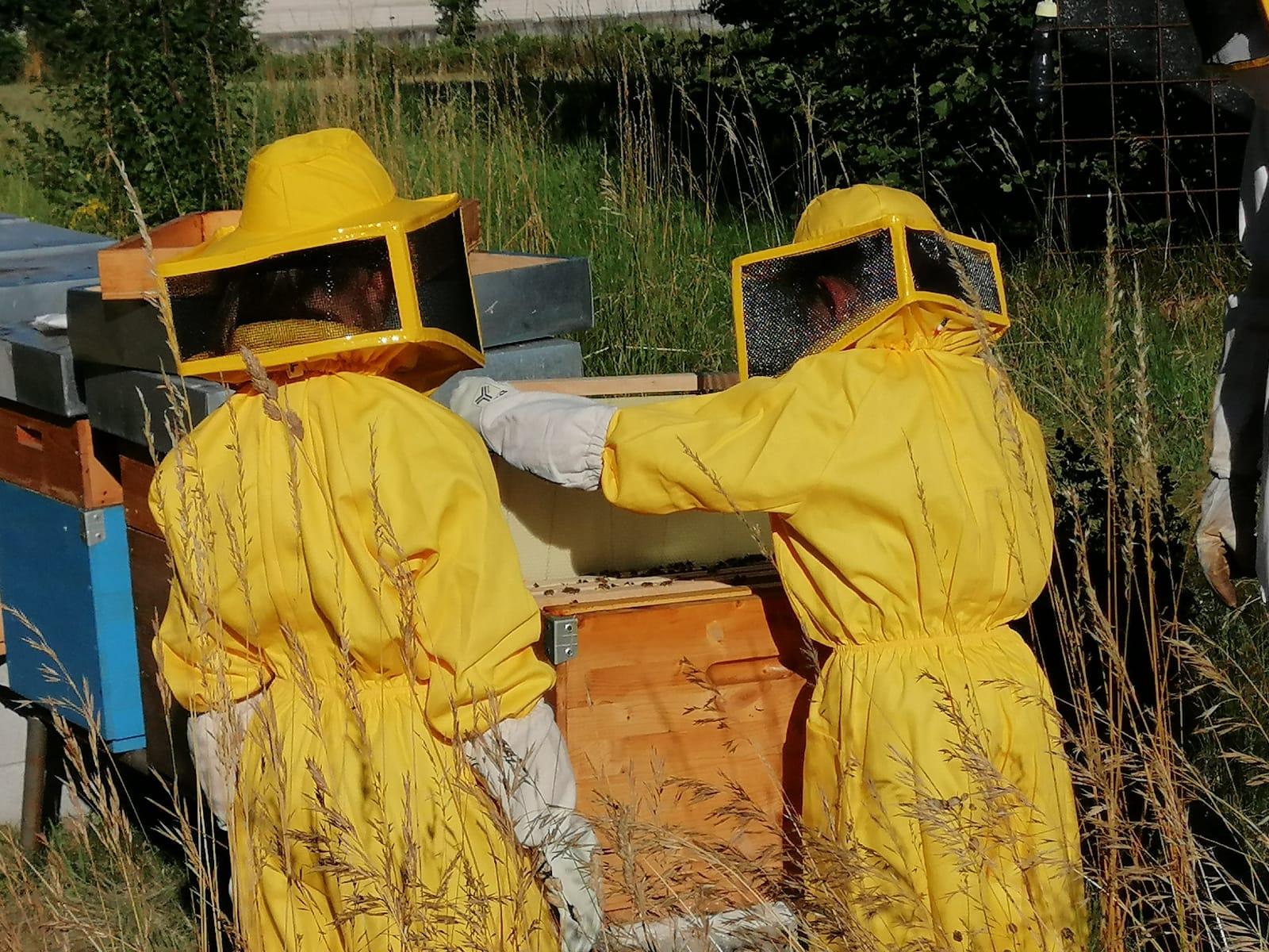vente de ruches apicoles