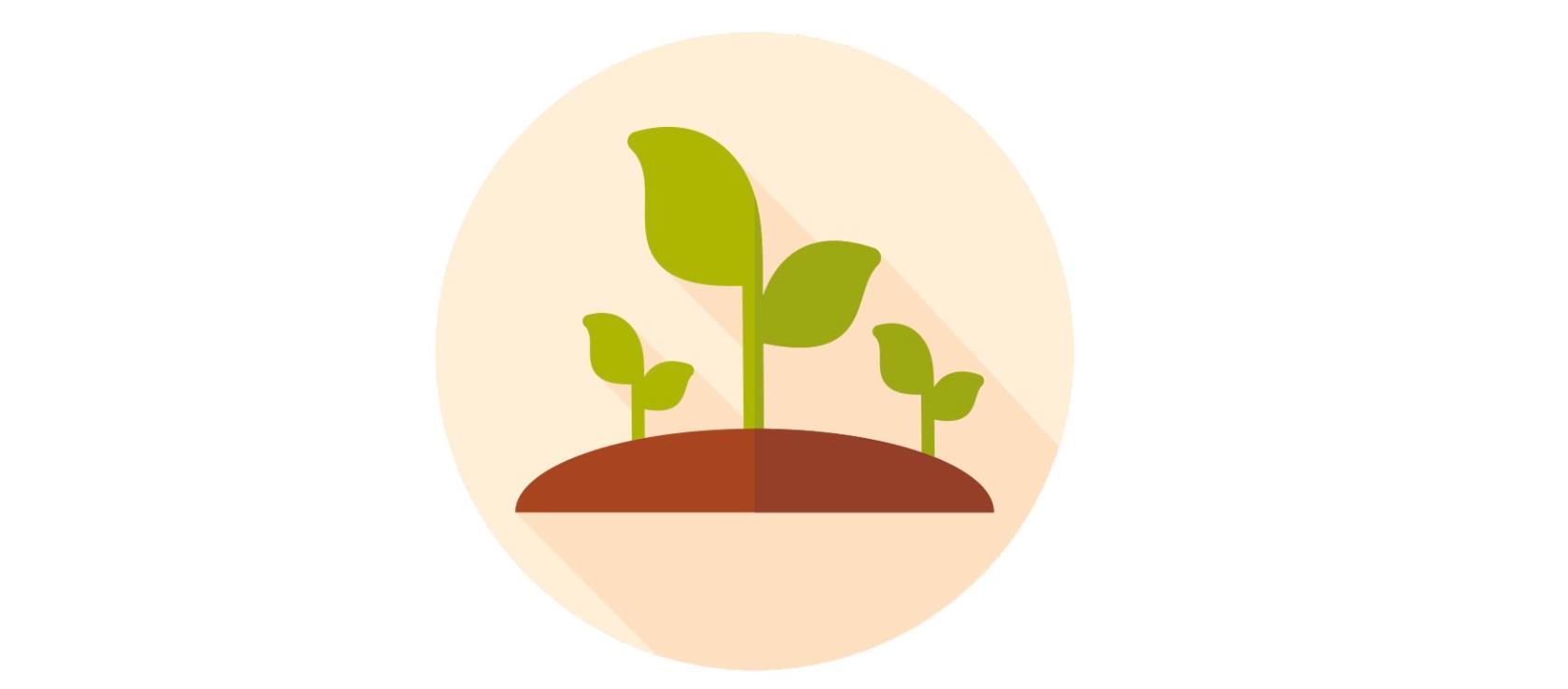 produzione lavorazione spezie piante aromatiche