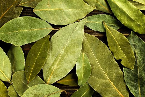 Produzione e Trasformazione erbe aromatiche