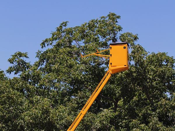 manutenzione alberi colleferro