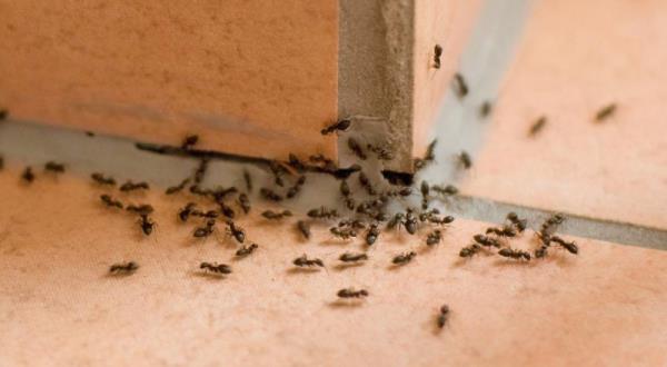 disinfestazione vespe sassari
