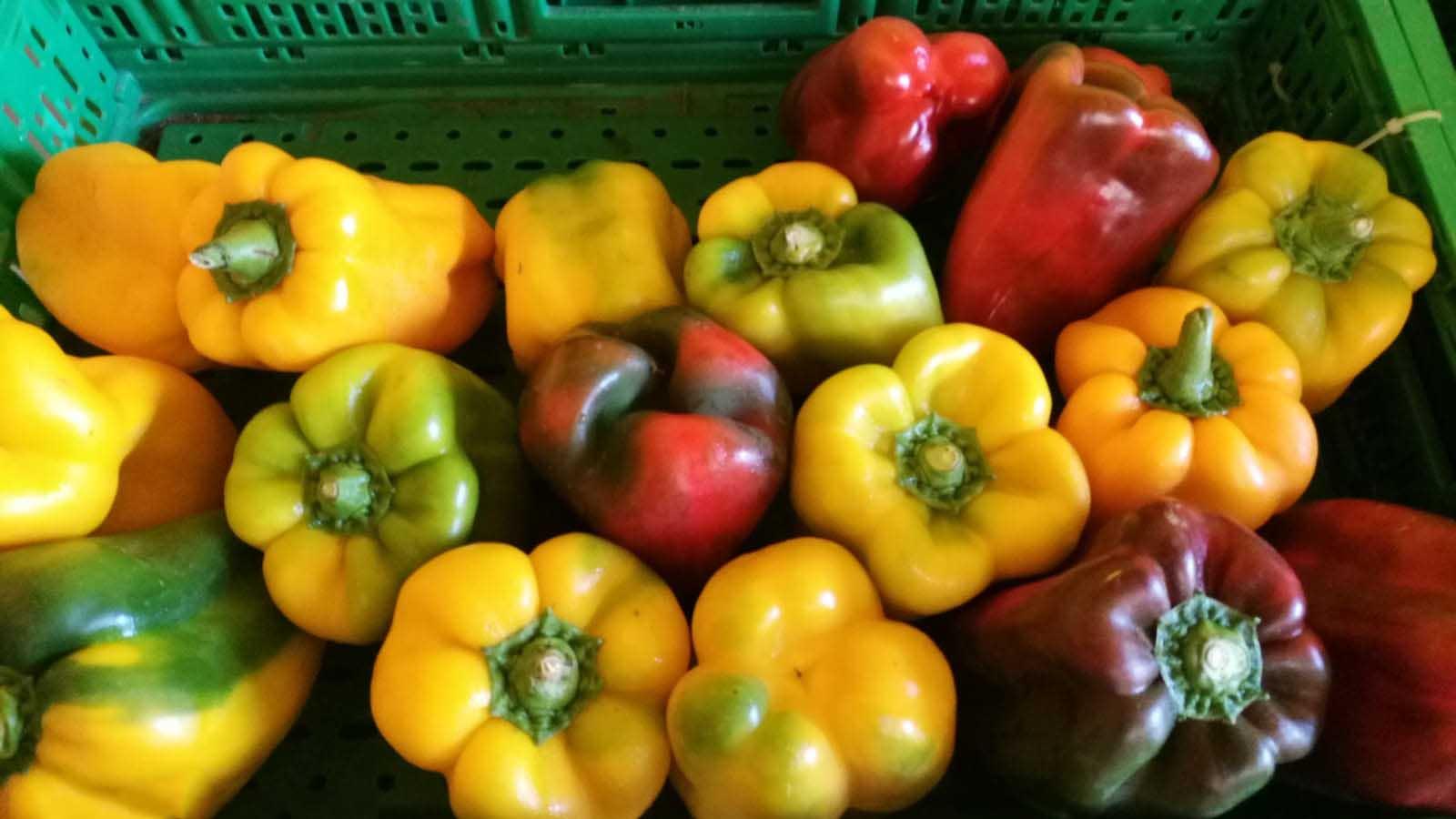 Frutta e ortaggi a km 0 Azienda Agricola Simi Giorgio