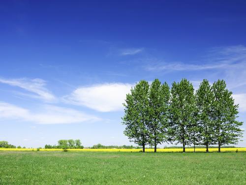 Pulizia di campi in erba Impresa Edile Vertullo Daniele