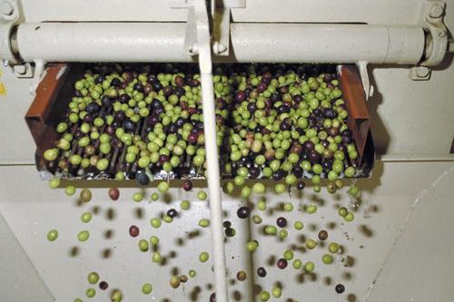 olio oliva marchio D.O.P. Sardegna