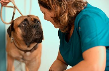 Visite specialistiche veterinarie Clinica Veterinaria D'Ovidio