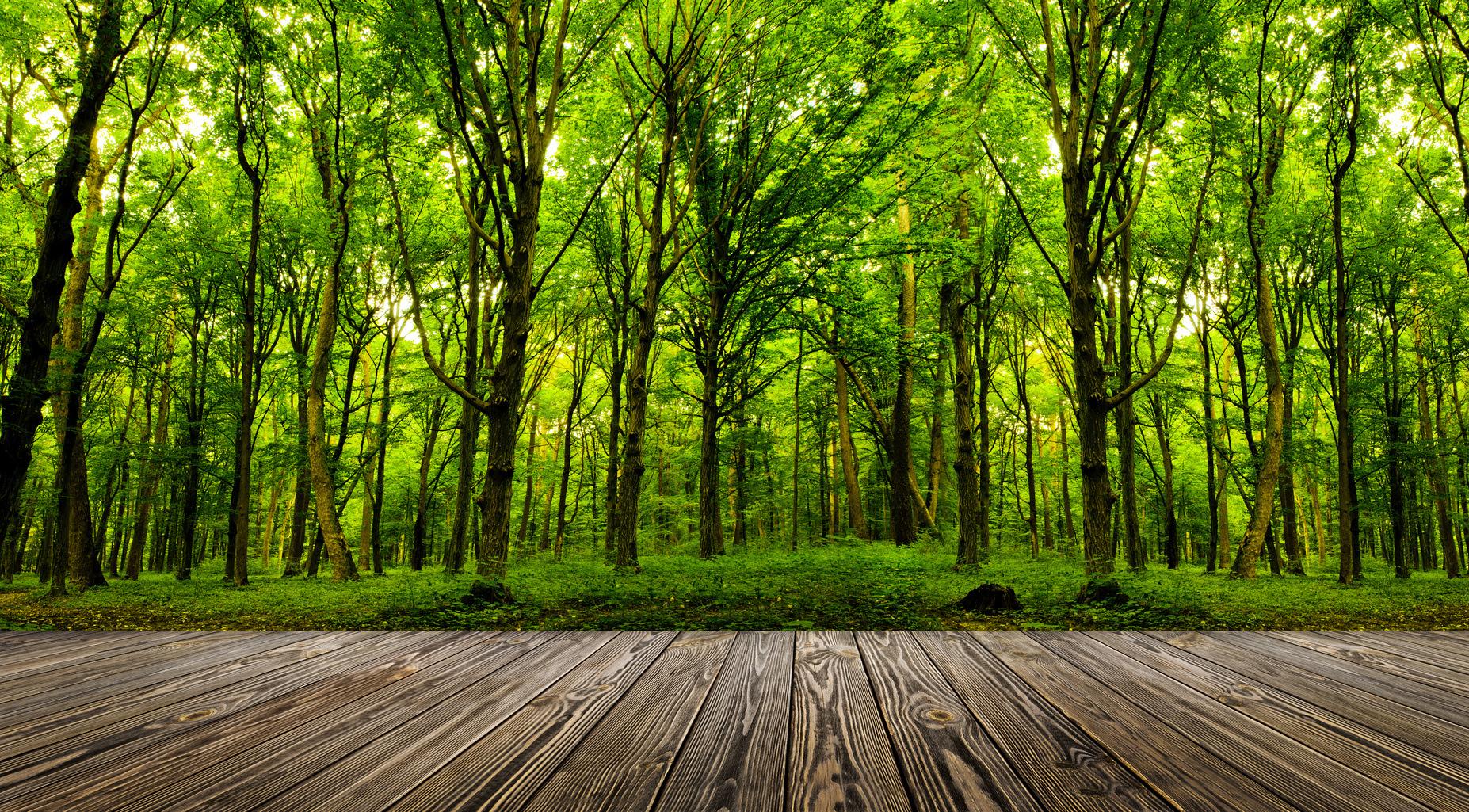 Case eco-sostenibili