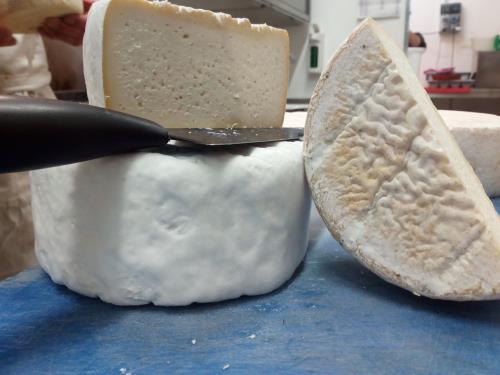 formaggi locali ad Alghero