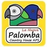 La Nuova Palomba Collecorvino (PE)