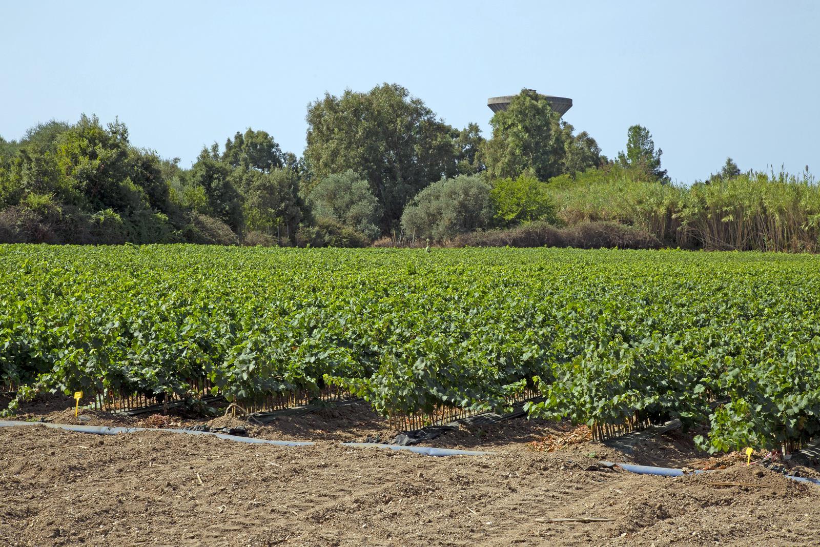 Azienda Agricola Simbula Gianluca