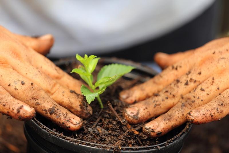 Concimi, bulbi e sementi Zooagricola