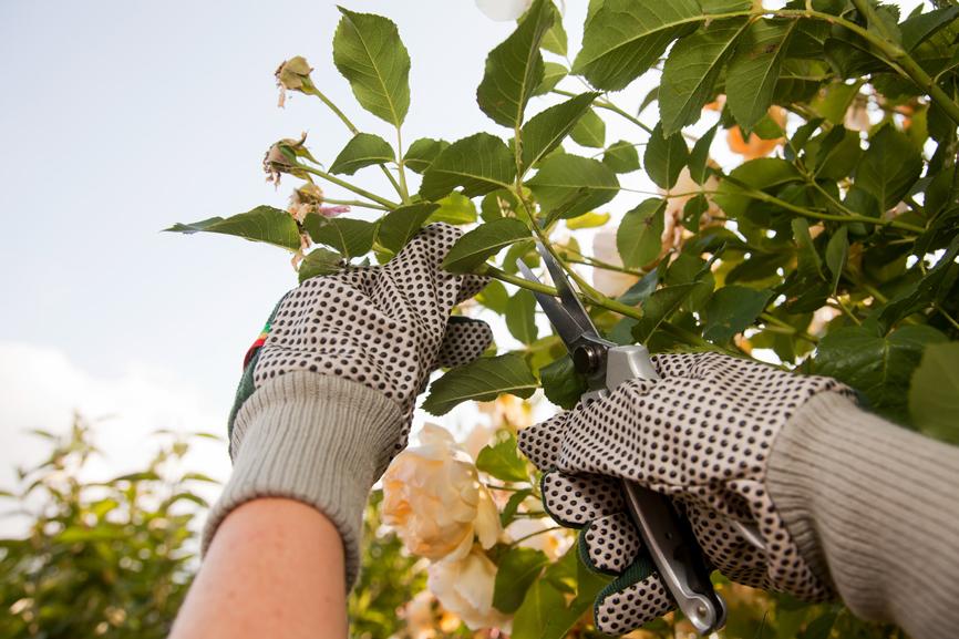 potature alberi crea il tuo giardino