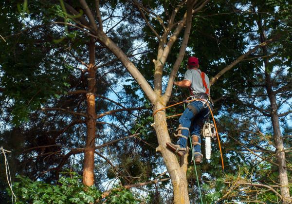 potature alberi crea il tuo giardino San Giovanni in Persiceto