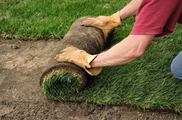 coop cmp Codrongianos manutenzione giardini