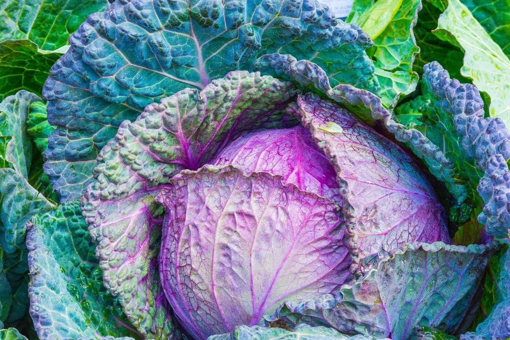 verdura fresca di stagione a Muggia