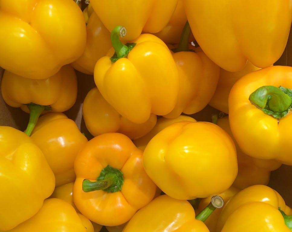 Zucchine senza pesticidi