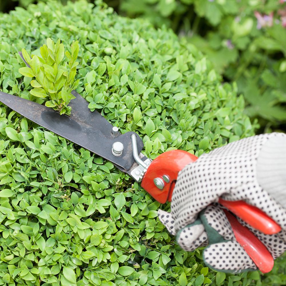 Servizi per la cura del verde Tecnogreen