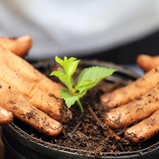 Offerte prodotti per il giardinaggio Tecnogreen