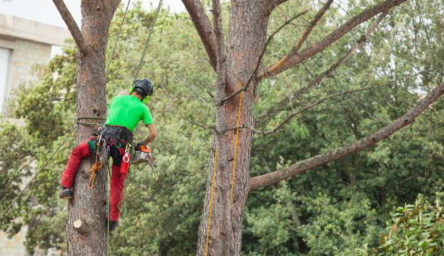 Potatura di alberi
