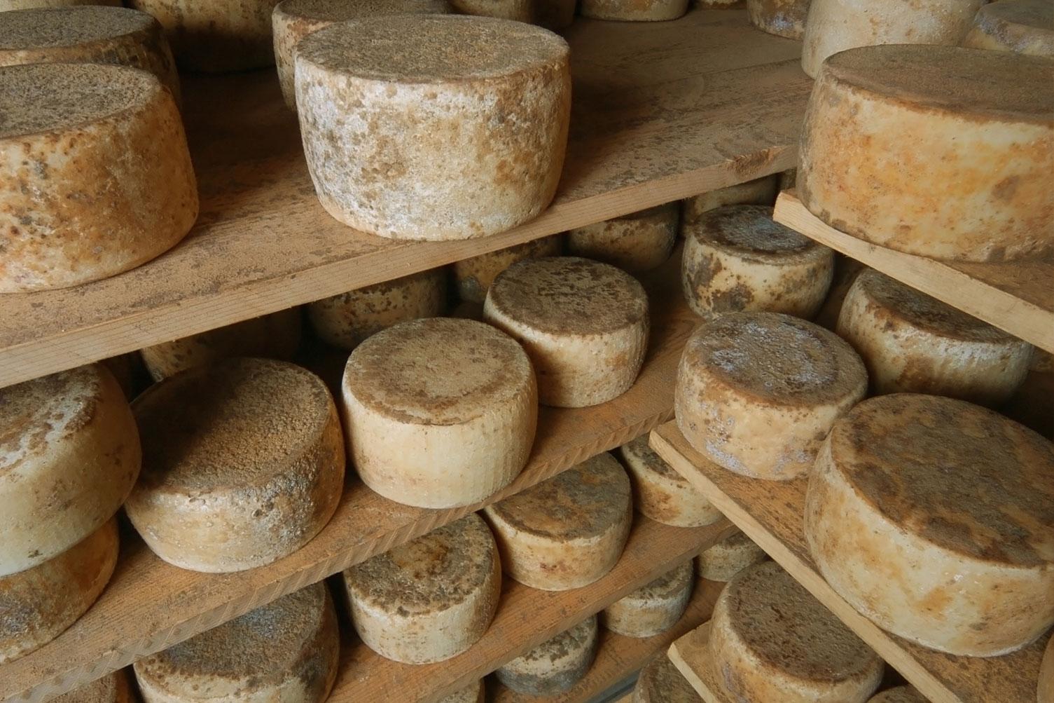 Produzione vini e formaggi