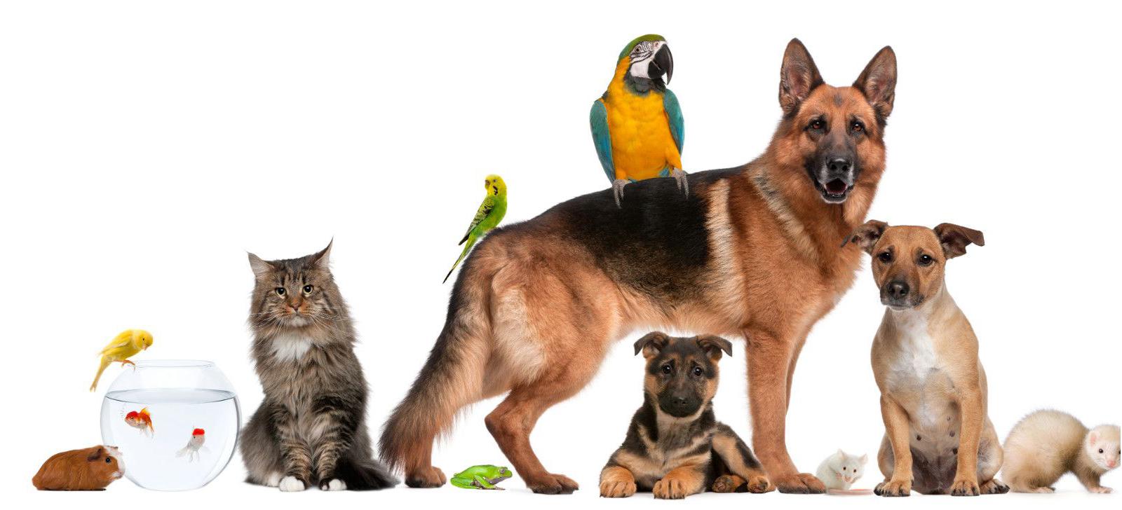 pet shop Leo Animali Polistena