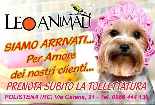lavaggio disinfezione e taglio pelo Cani e gatti Leo Animali Polistena Reggio Calabria
