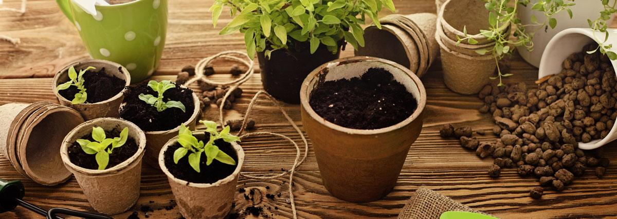vesna-plant-santa-croce-camerina-ragusa