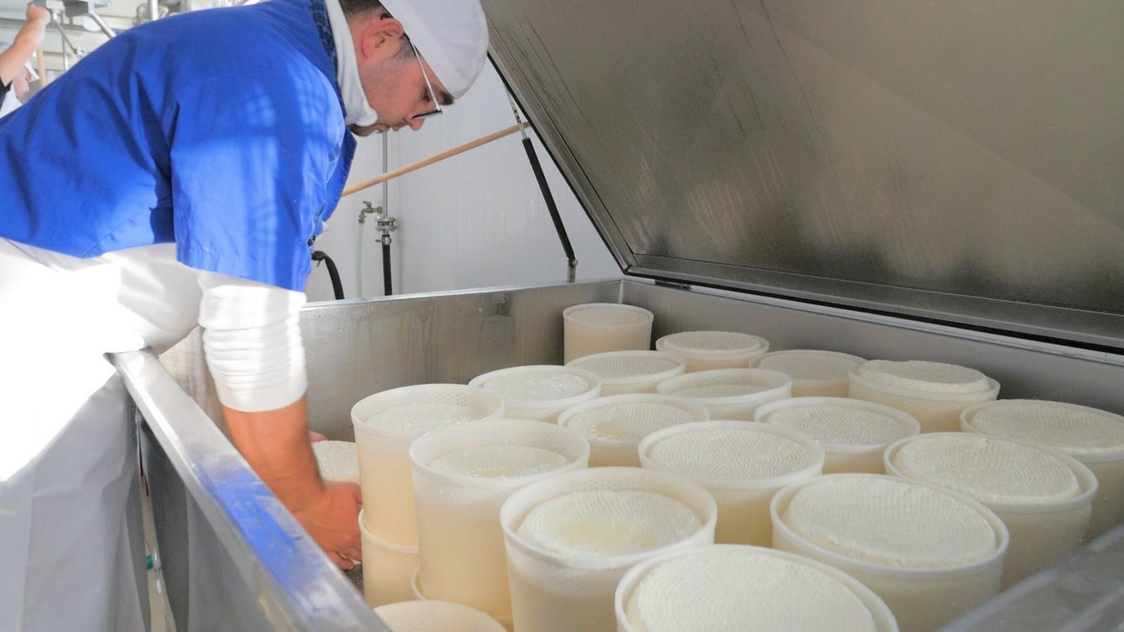 formaggio capra e pecora