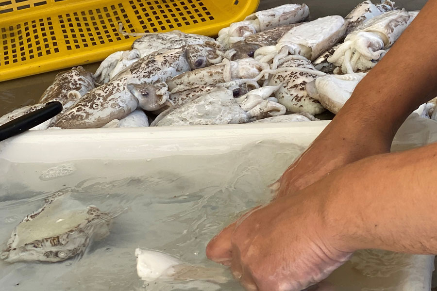 lavorazione pesce bari
