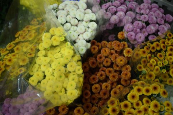 Vendita fiori e articoli di giardinaggio Trieste