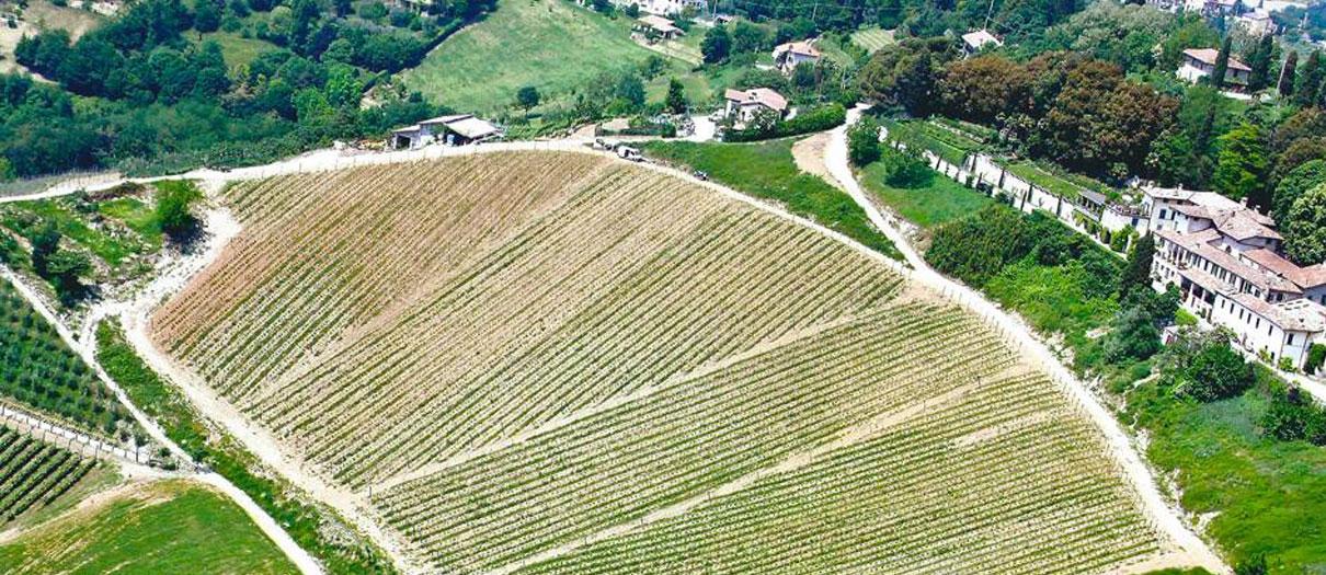 produzione vini di qualità bergamo