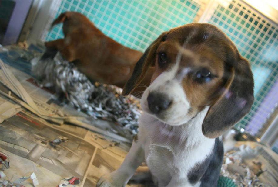 cuccioli in adozione bg