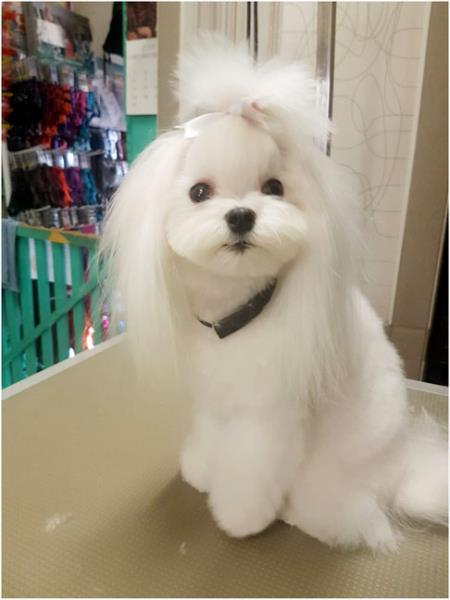 lavaggio cani bg