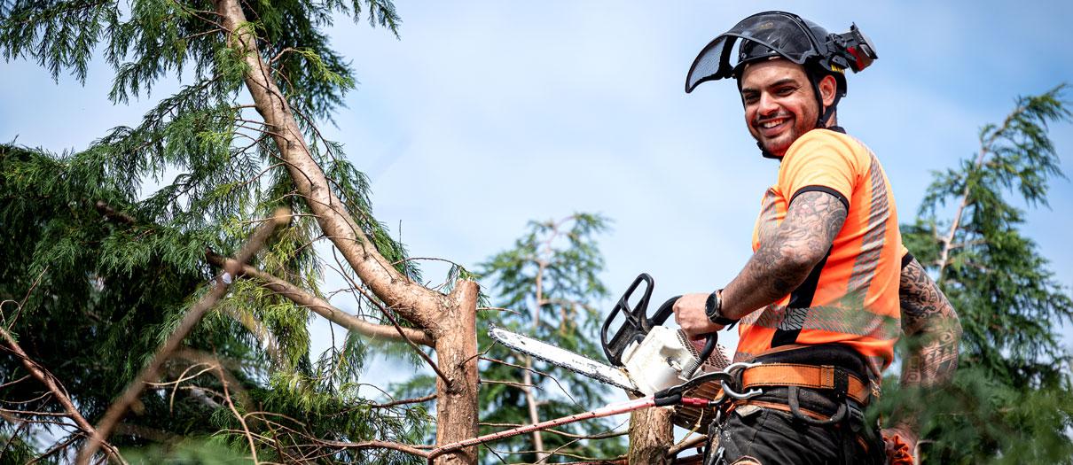 potature tree climbing verona