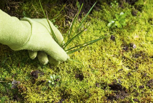 giardinaggio e cura del verde verona