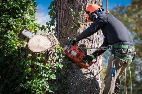 potatura alberi tree climbing verona