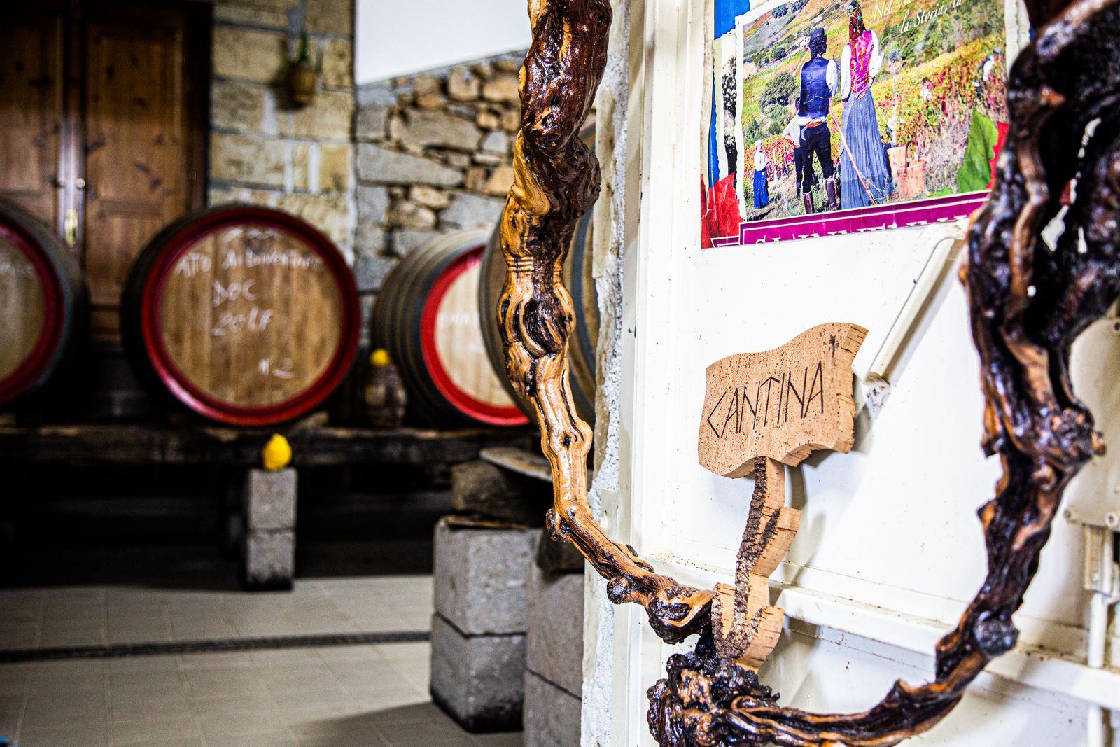 vitigni autoctoni e tradizionali sardi